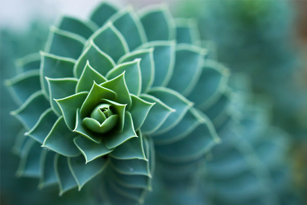 bokeh spiral