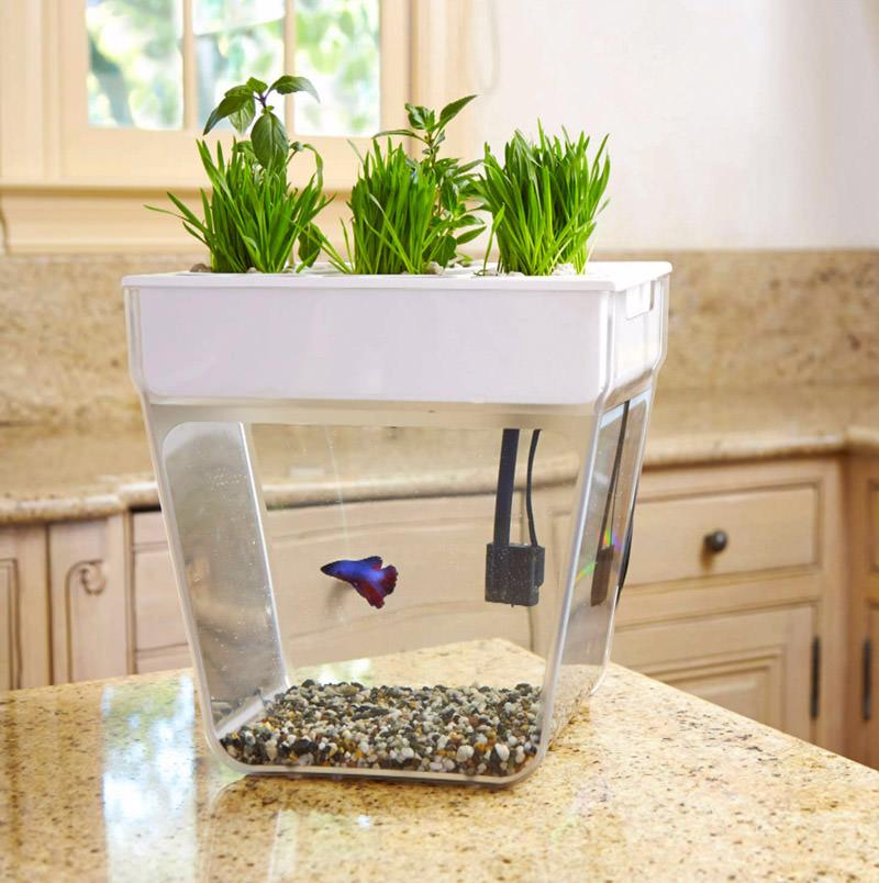 back-to-the-roots-aquafarm-3-gallon-fish-tank