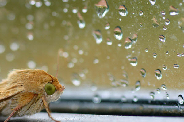 rain and moth