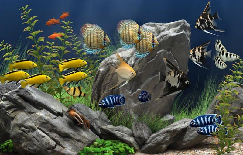 dream-aquarium-3d