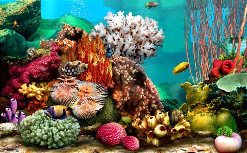 living-marine-aquarium