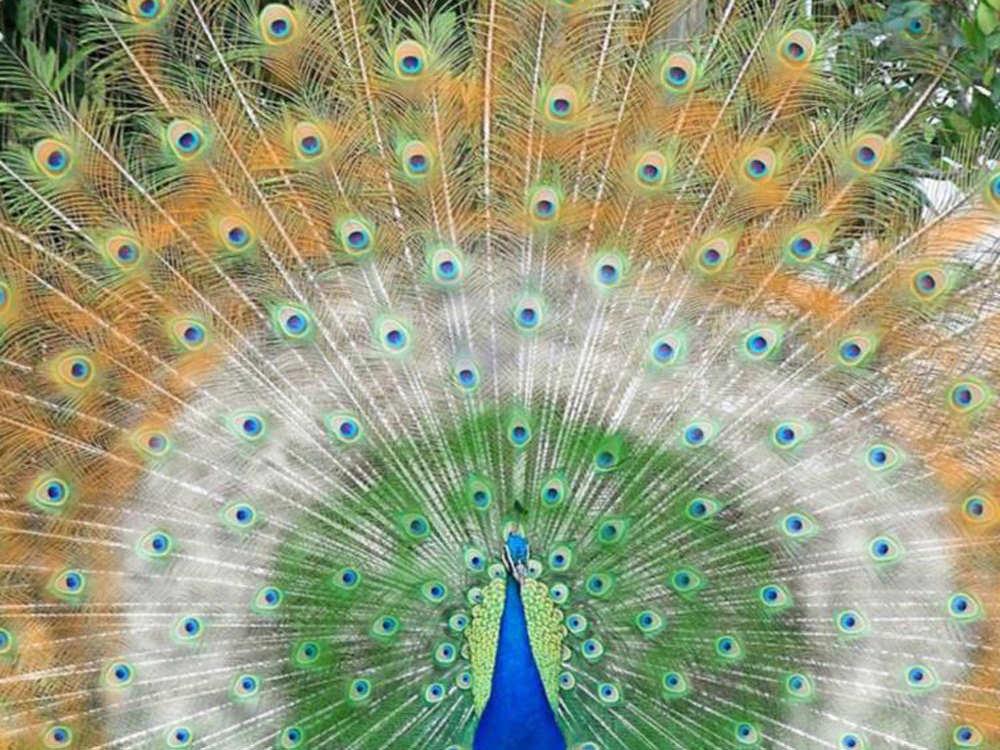 50 amazing wildlife animal wallpapers hongkiat beautiful wild wings voltagebd Image collections