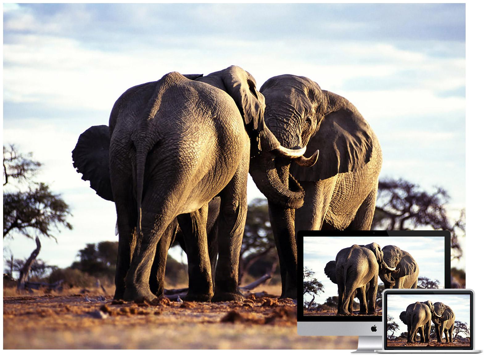 50 amazing wildlife animal wallpapers hongkiat beautiful horses voltagebd Image collections