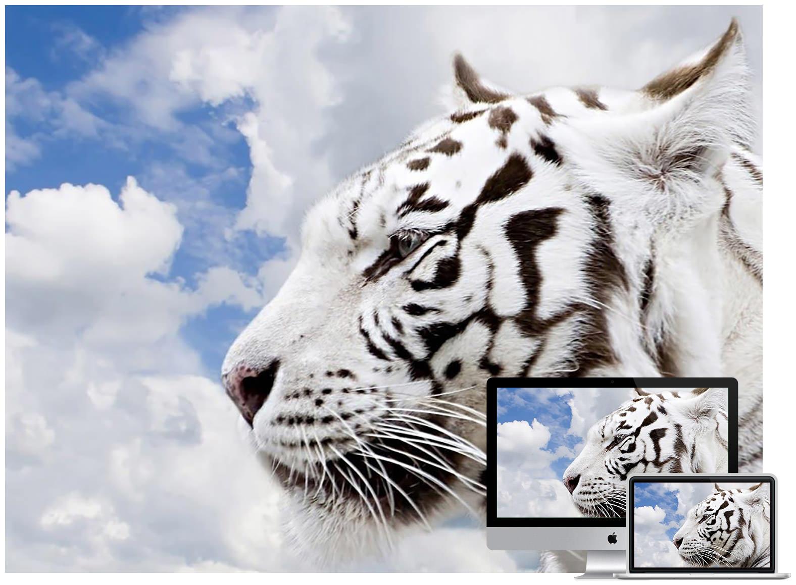wildlife animal wallpapers