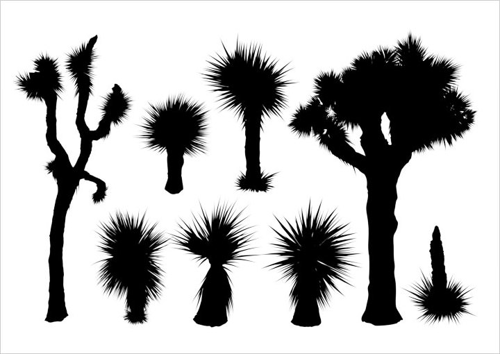 yucca-silhouettes