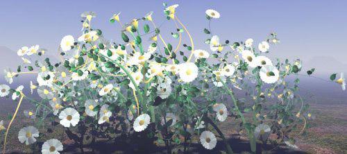 growing_flowers
