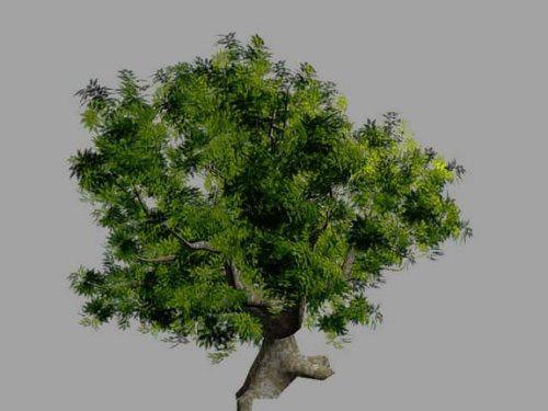 realistic_tree