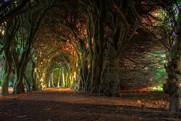 fairytale-tunnel