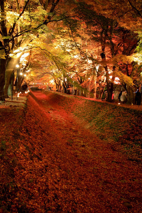 maple-tunnel-japn