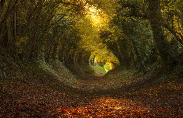 The Tree tunnel, Halnaker, England