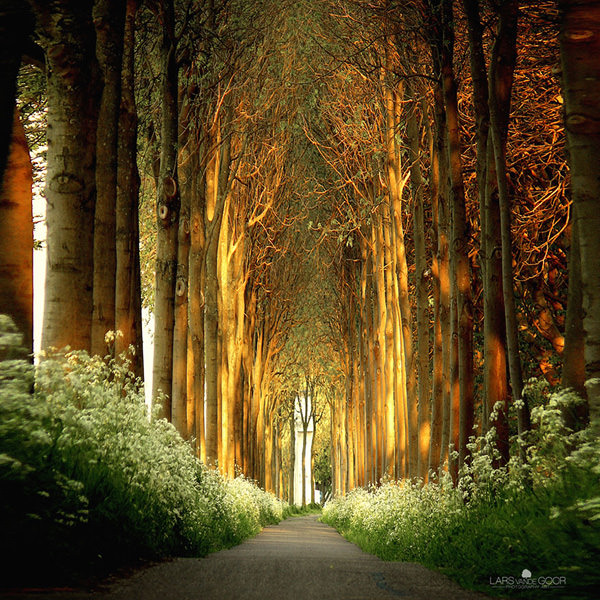 tree-tunnel-neatherlands