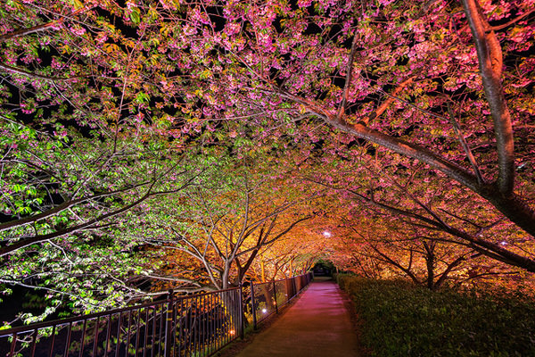 love tunnel japan