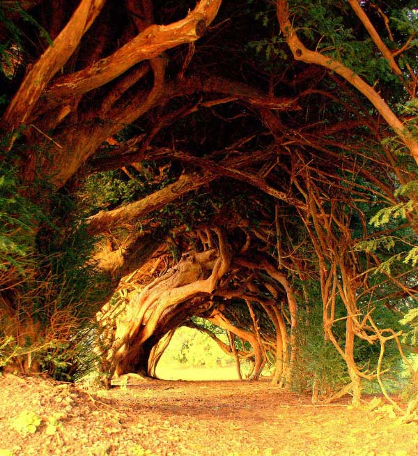 Yew Tree Tunnel, Carmarthenshire, UK