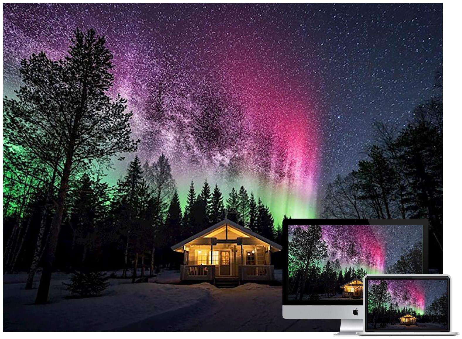 aurora-forest