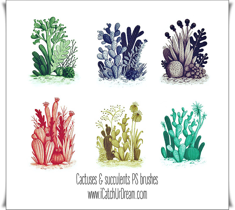 Cactuses Plants Brushes