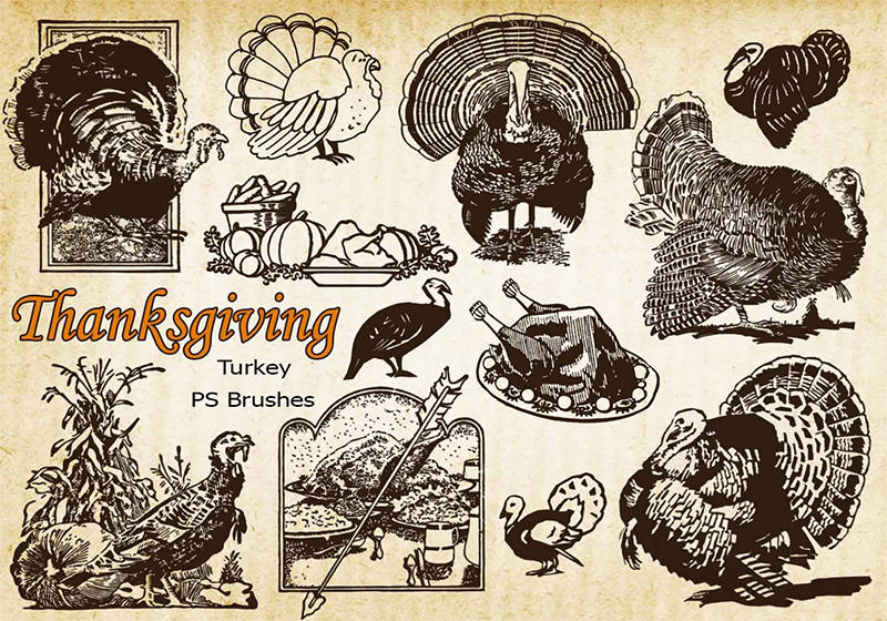Thanksgiving Vintage Turkey PS Brushes