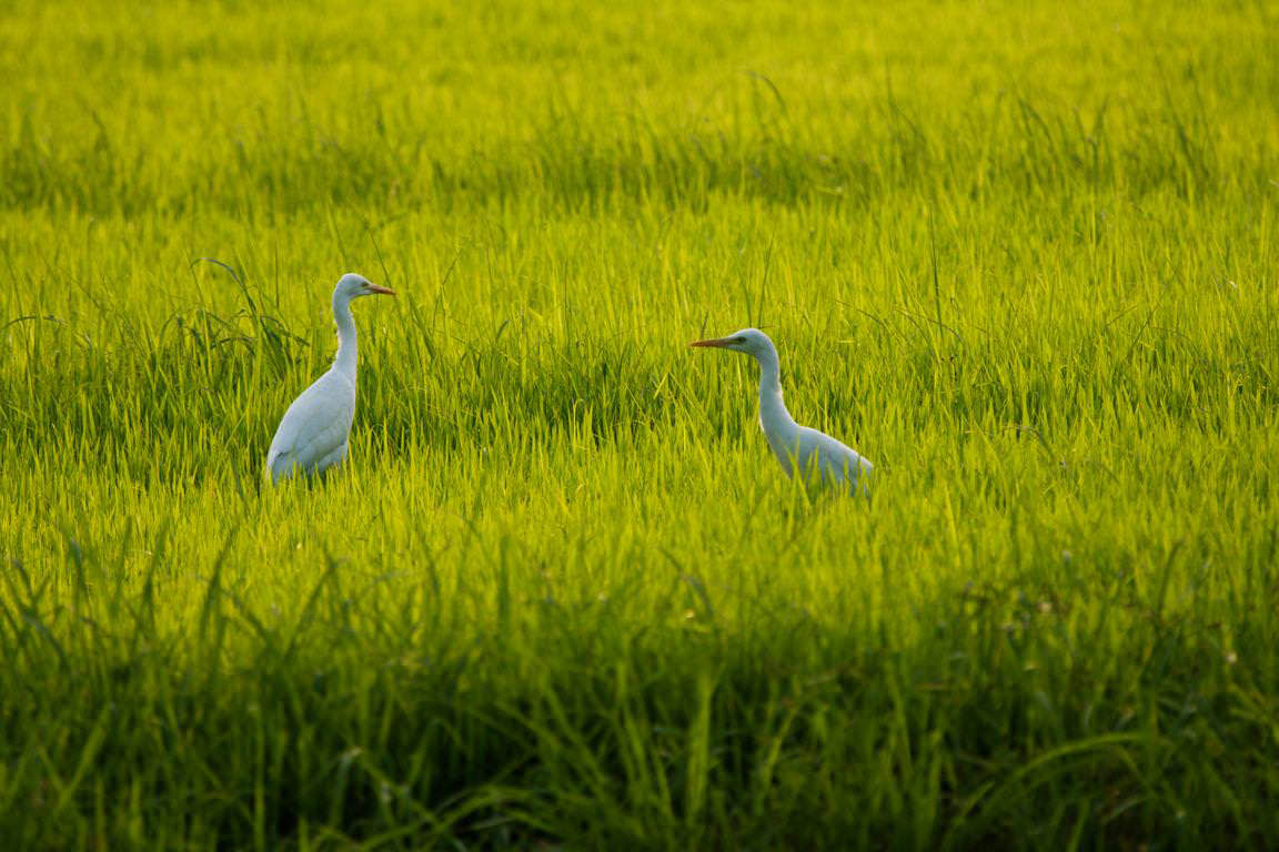 Bird Sanctuary at Vedanthangal