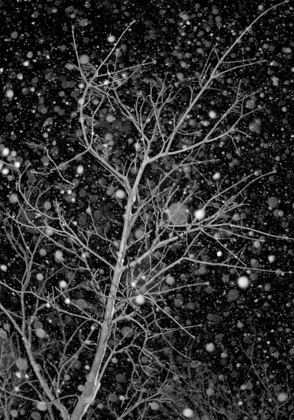 bokeh snow tree