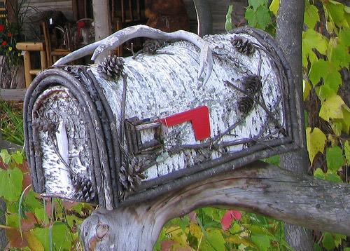Birch Tree Mailbox