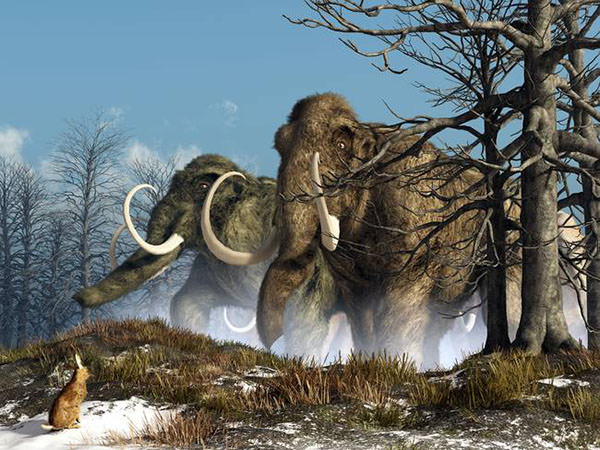 rabbit witnesses a herd of mammoths