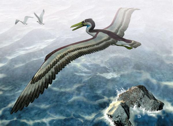 pseudo-toothed bird