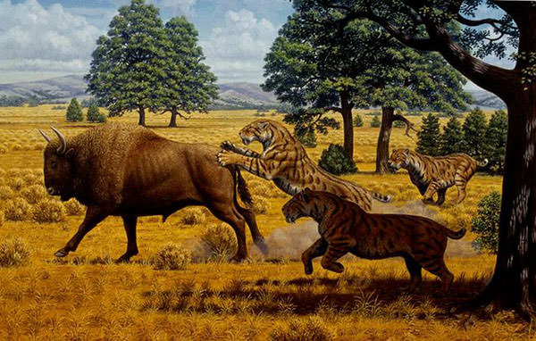 sabertooth cats and bison