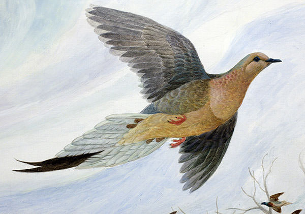 last passenger pigeon