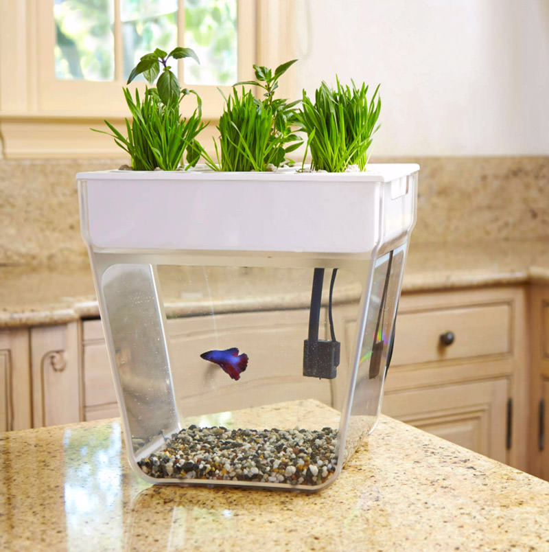 back-to-the-roots-aquafarm-3-gallon-fish-tank