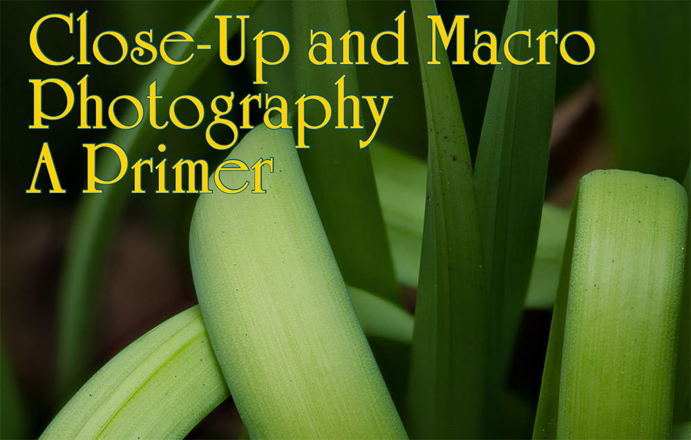 Close-up-and-Macro-Photography