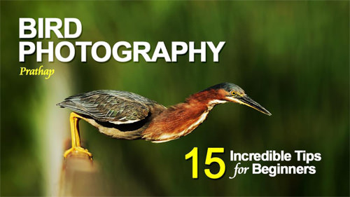 15 Incredible Bird Photography Tips For Beginners