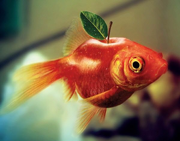 apple fish