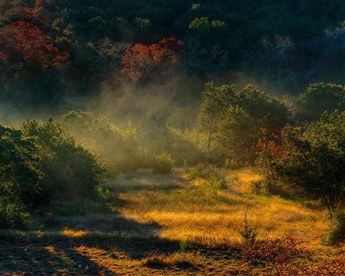 Mist Lifting Off Cedars