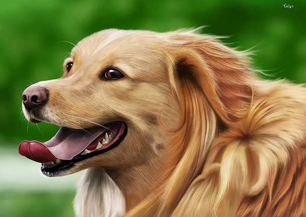 rafael dog