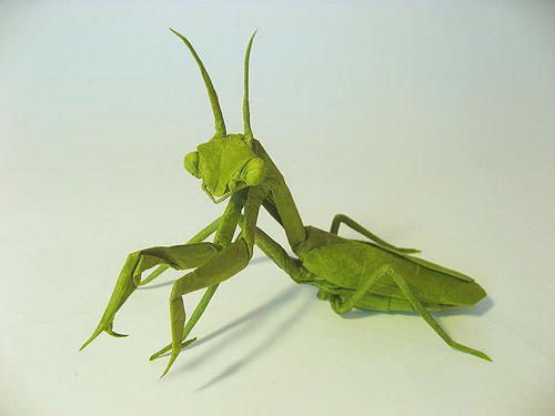 Praying Mantis female