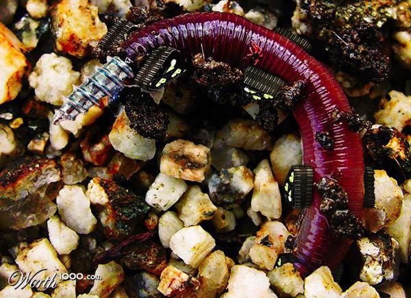 driller worm