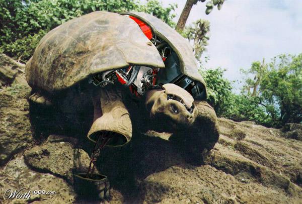 robo-turtle