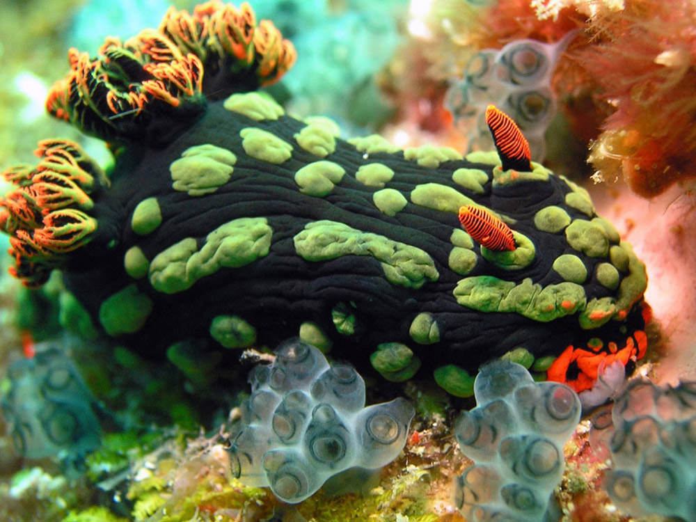 ea-underwater-life