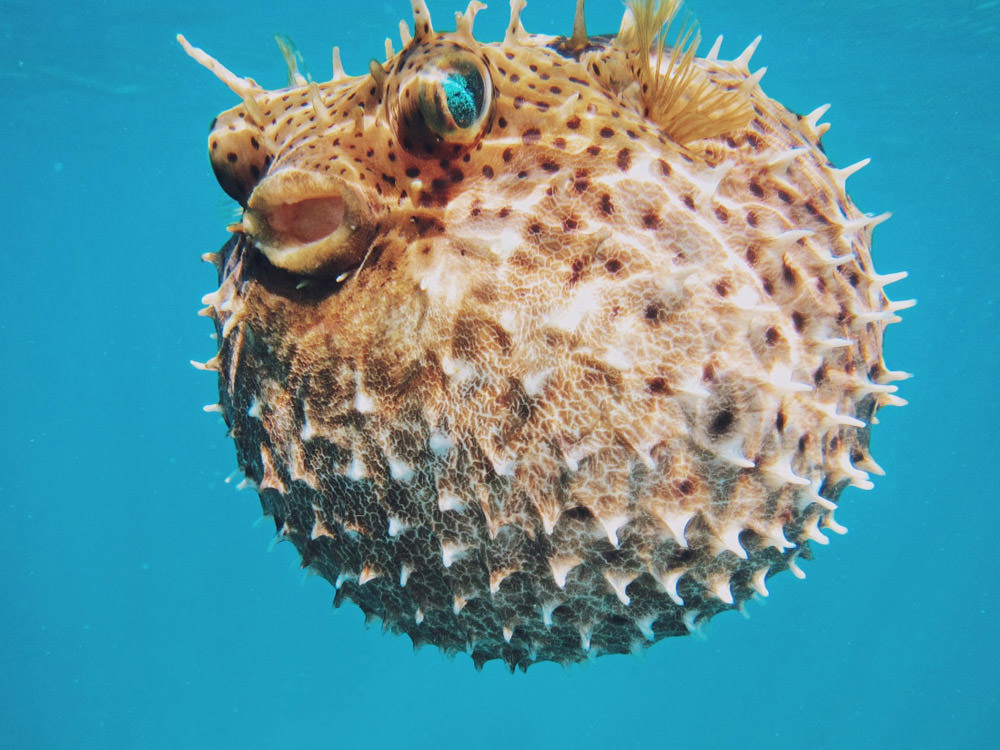 sea-urchin-underwater-world-spines