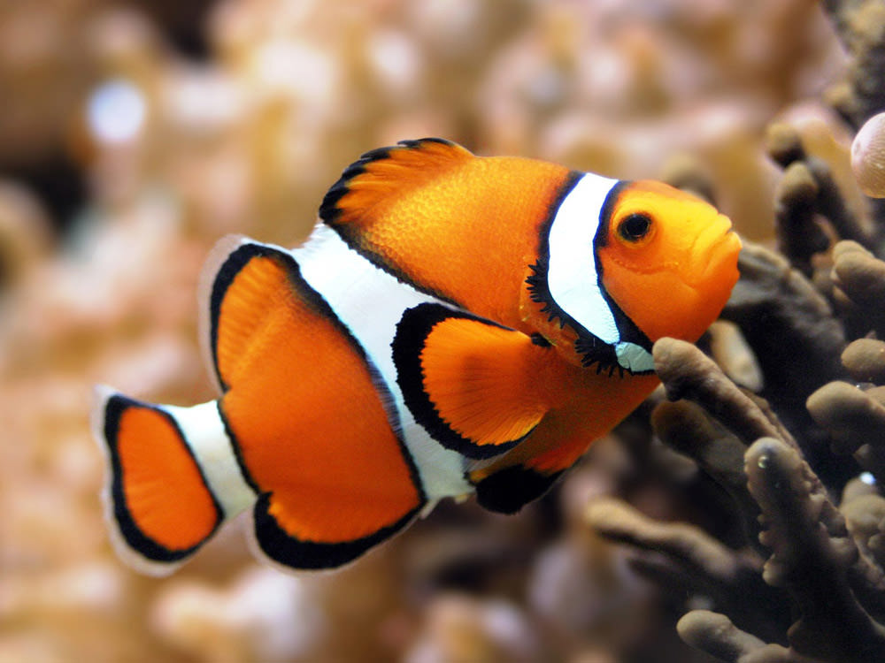 wonderful-clownfish