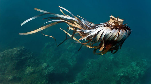 underwater-trash-sculptures