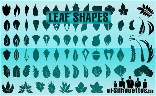 leaf_shapes