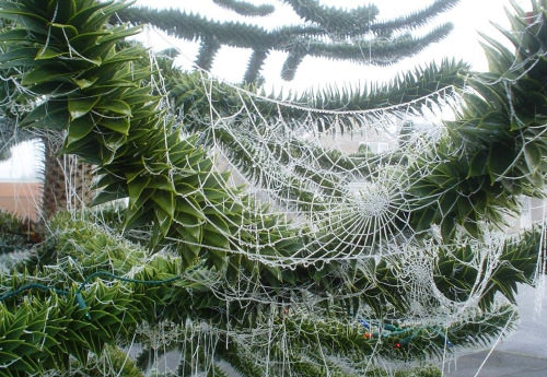 Spidey-Christmas-Ukraine