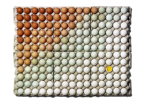 eggs-organized-neatly