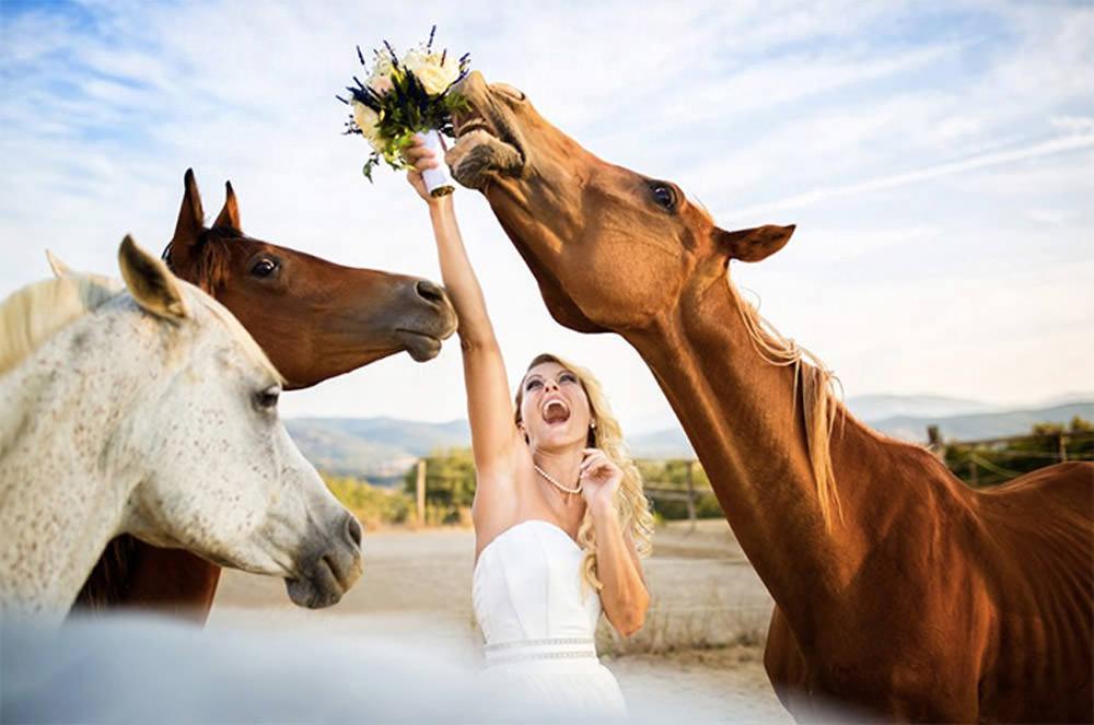 2-fabio-horses