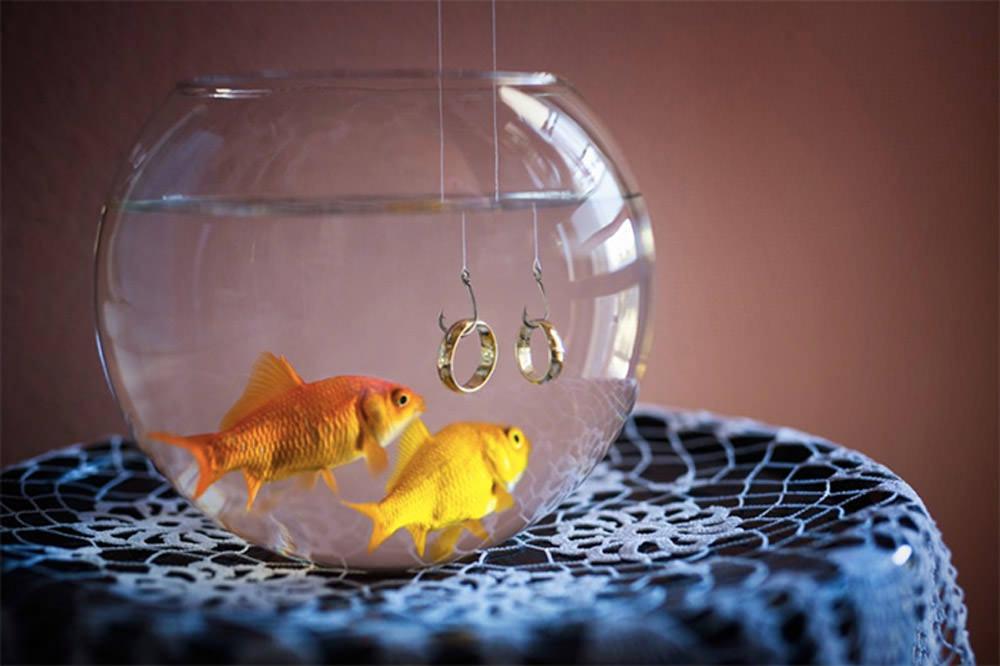 3-fabio-fish
