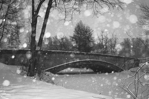 winter photography
