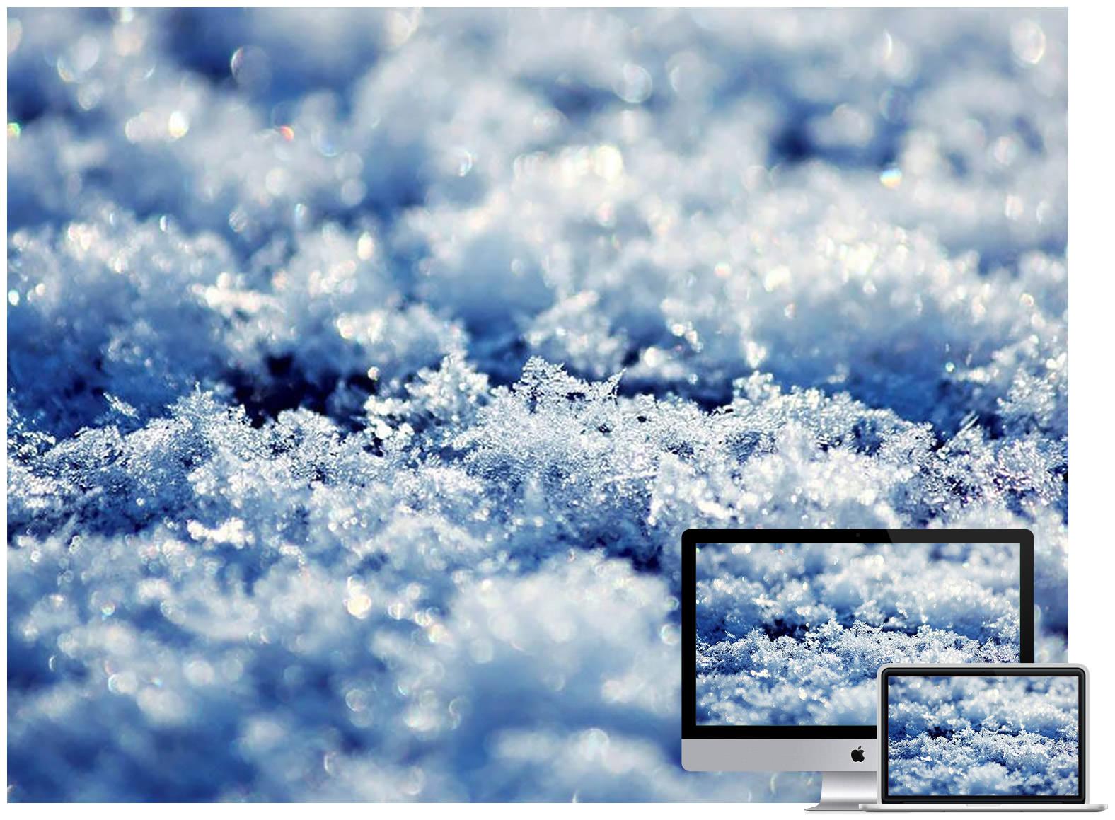 Macro Nature Winter