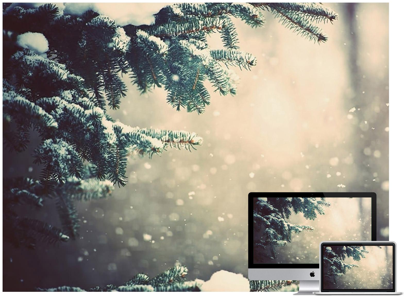 Winter Spruce Glare