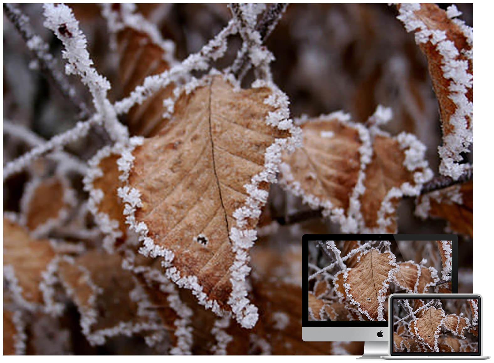 brown leaves - Bộ ảnh nền mùa Đông đẹp dành cho máy tính