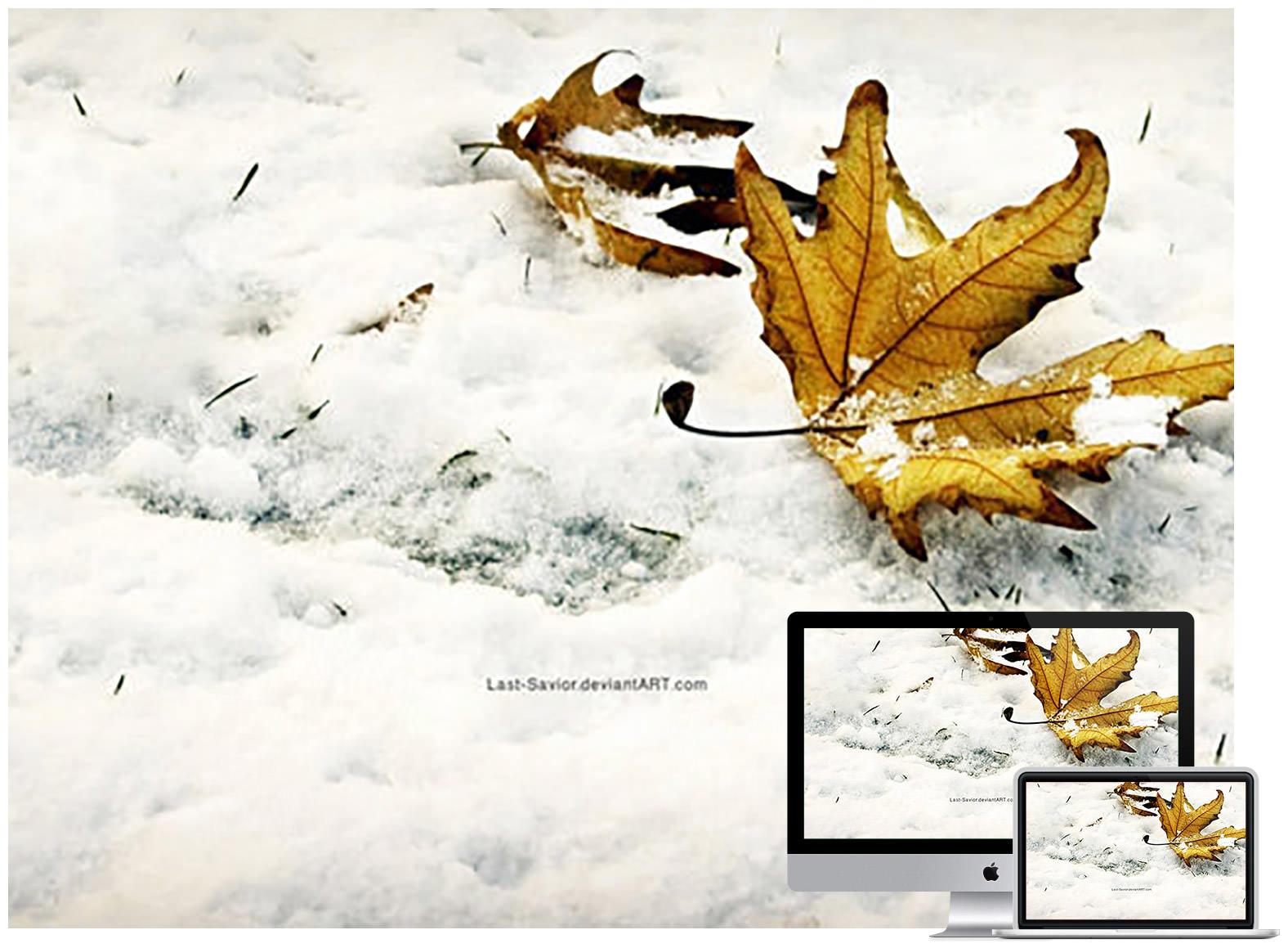 winter fall - Bộ ảnh nền mùa Đông đẹp dành cho máy tính
